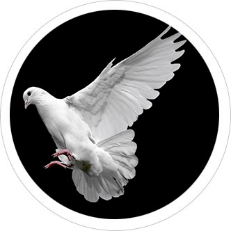 About the doves used at weddings and funerals